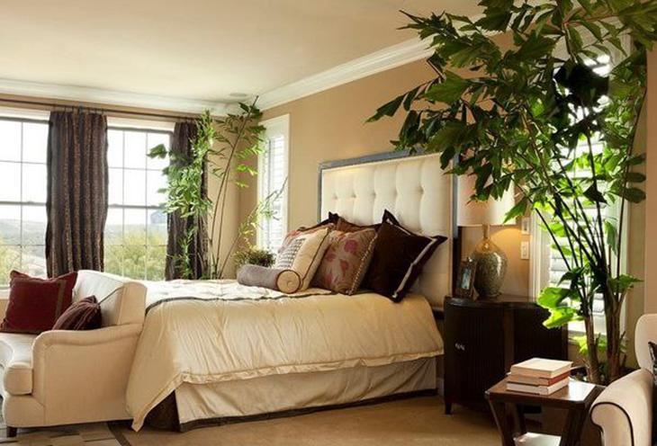 臥室適合擺放的植物